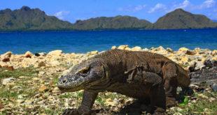 Komodo-Nationalpark in Indonesien verlangt 1000 Dollar Eintritt