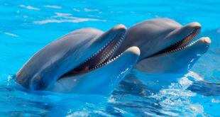 Europas Wale und Delphine vom Aussterben bedroht