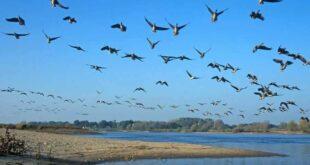 Brandenburg – Vogelzug über der Elbe